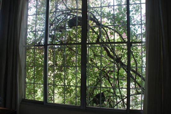 window and trees